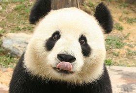 Awkward_Pandas